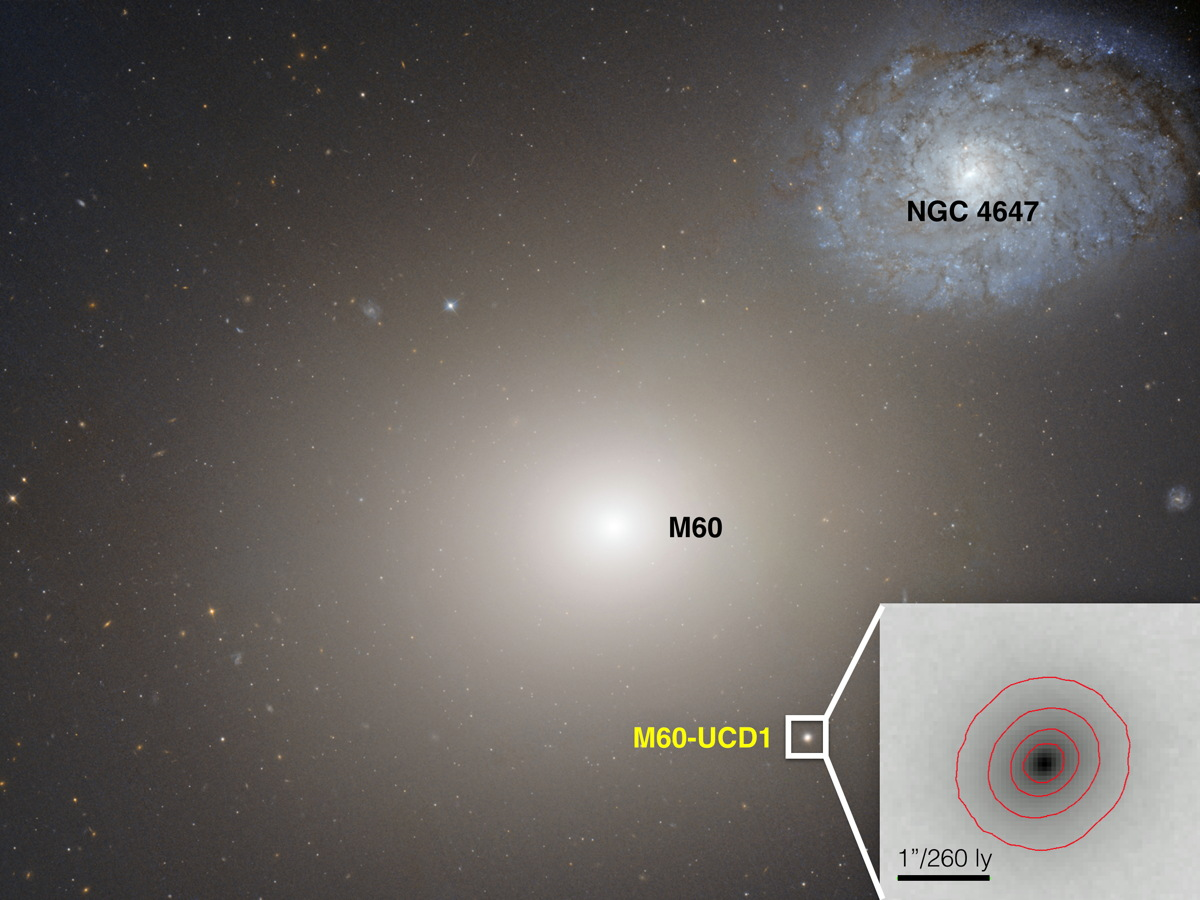 This image shows a huge galaxy, M60, with the small dwarf galaxy that is expected to eventually merge with it. (NASA/Space Telescope Science Institute/European Space Agency)
